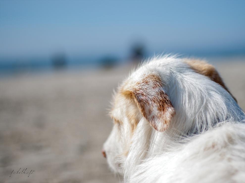 Hundestrand Sylt Hörnum Sommer