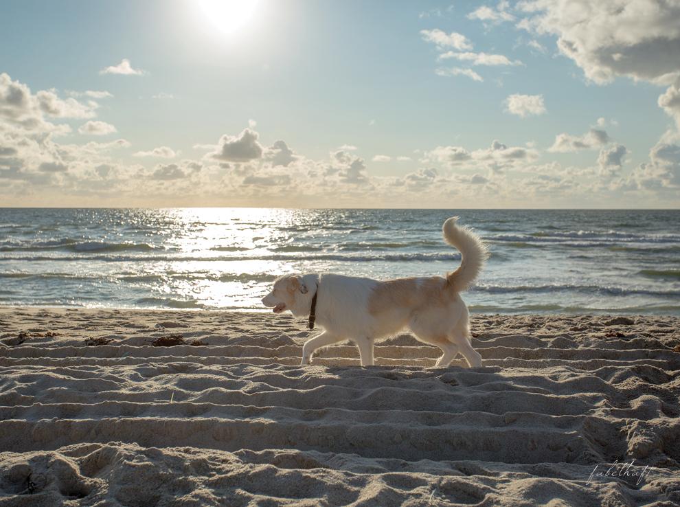 Sandstrand Hundestrand Strandkorb Sylt