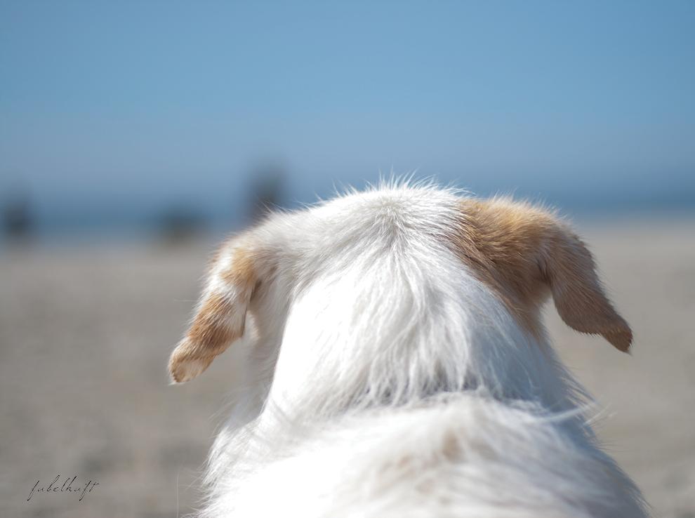 Sommer Sandstrand Strandkorb Hund