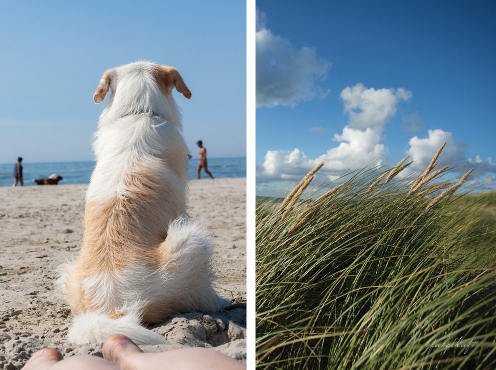 Sommer Sylt Strand Hund