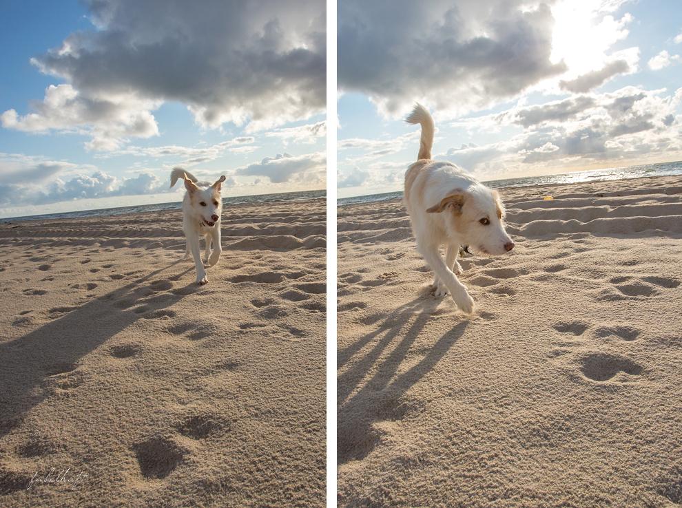 Sylt Sommer Strand Sand Hund