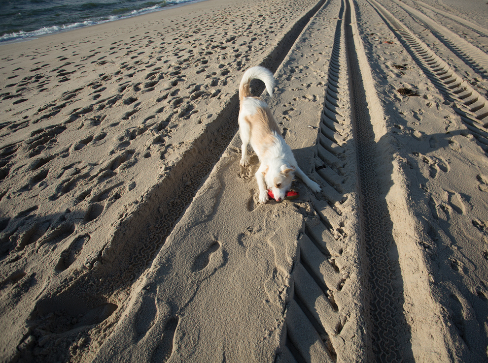 Sylt Strand Nordsee Hund