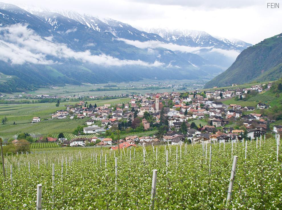 Apfelblüte Südtirol