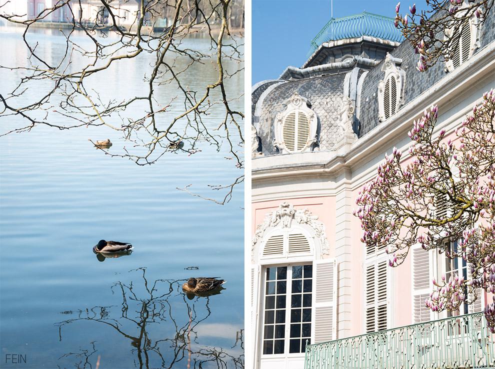 Düsseldorf Schloss Benrath schlafende Enten