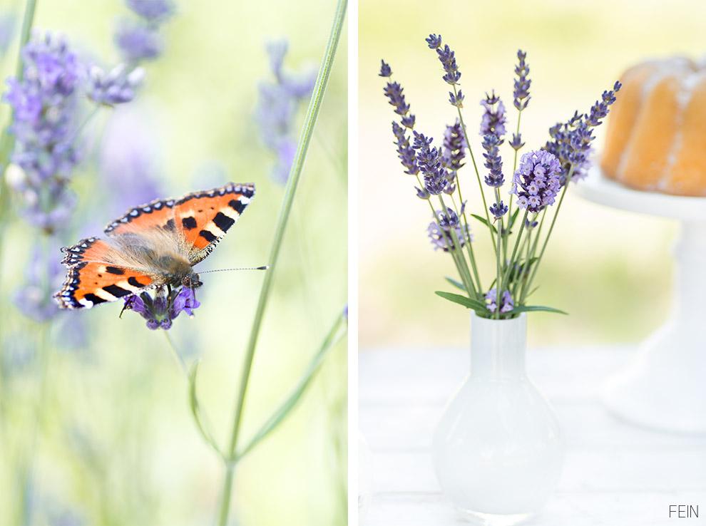 Lavendel Schmetterling