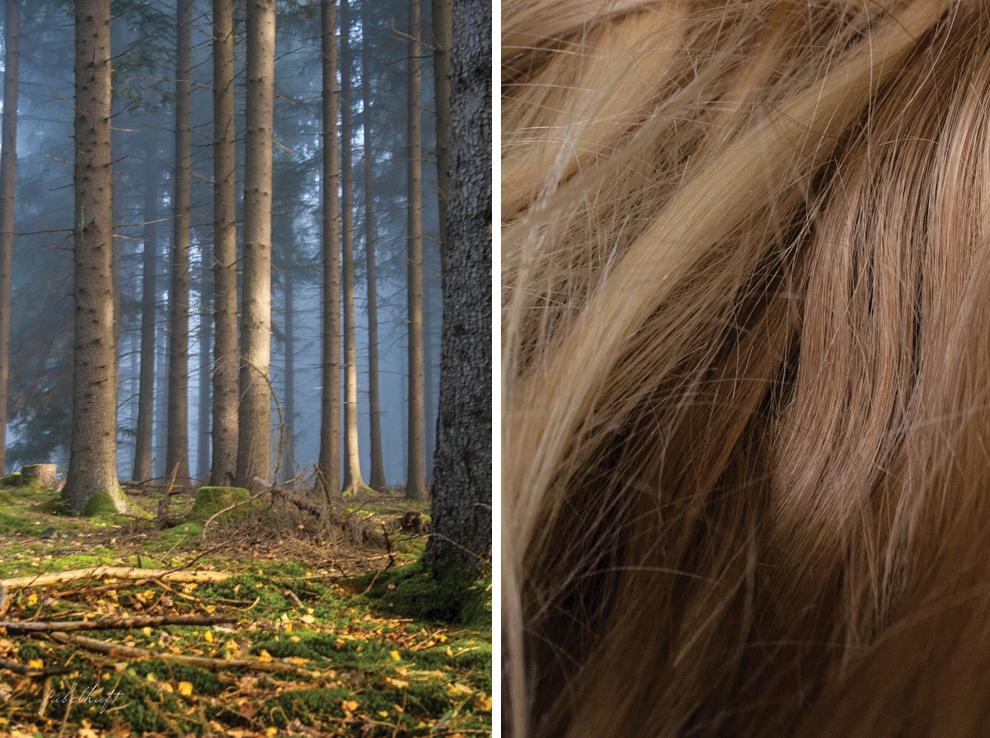 Haare Blond Wald Natur Shampoo Love me Green Eco Cert