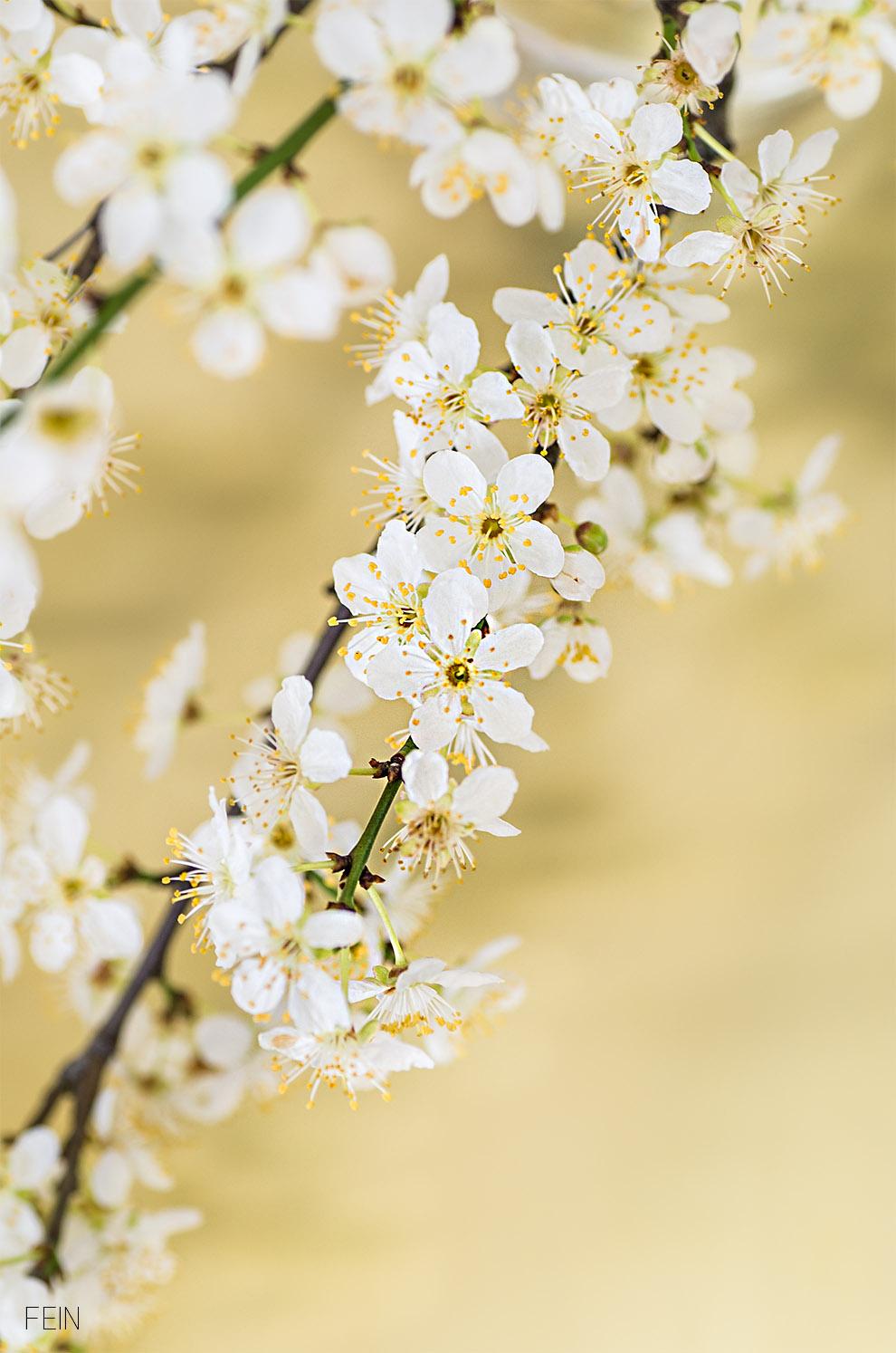Marmor Schlehenblüten