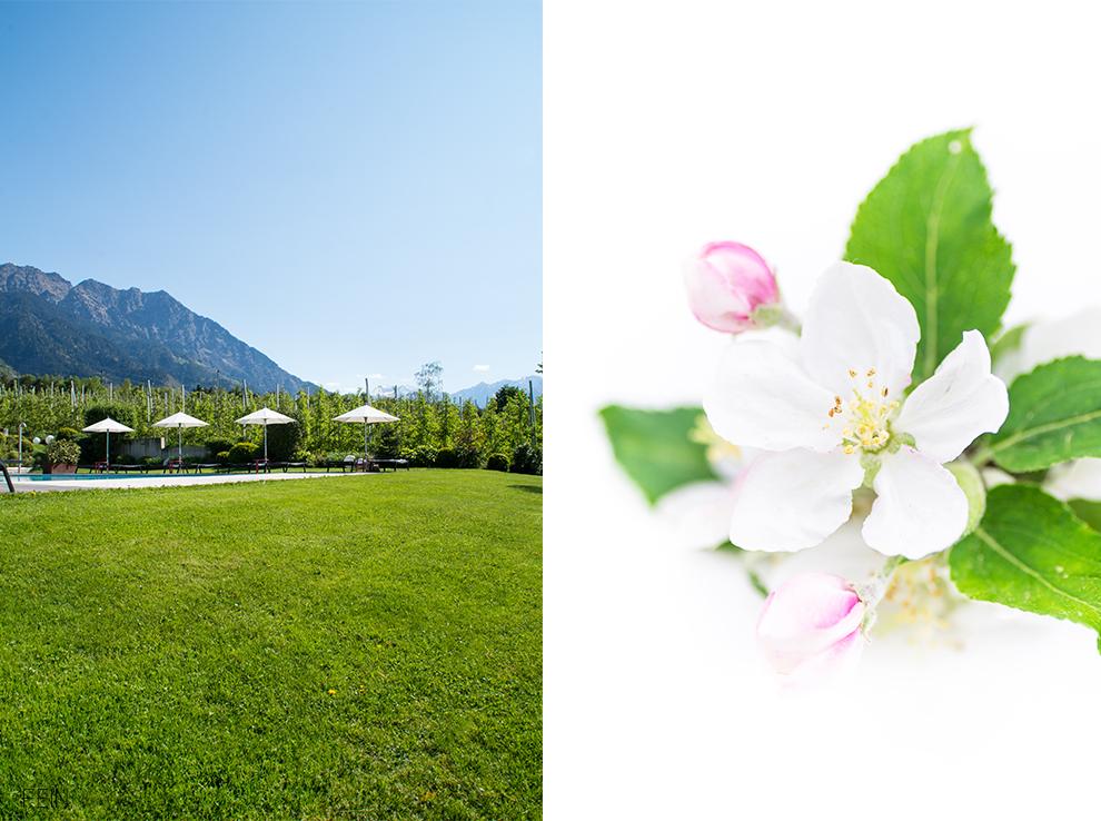 Sommerdrink Apfelblüte