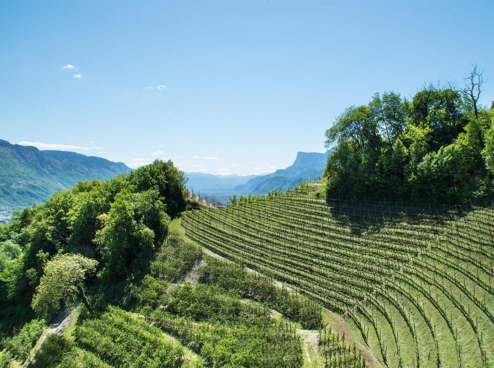 Sommerdrink Südtirol Weinberge