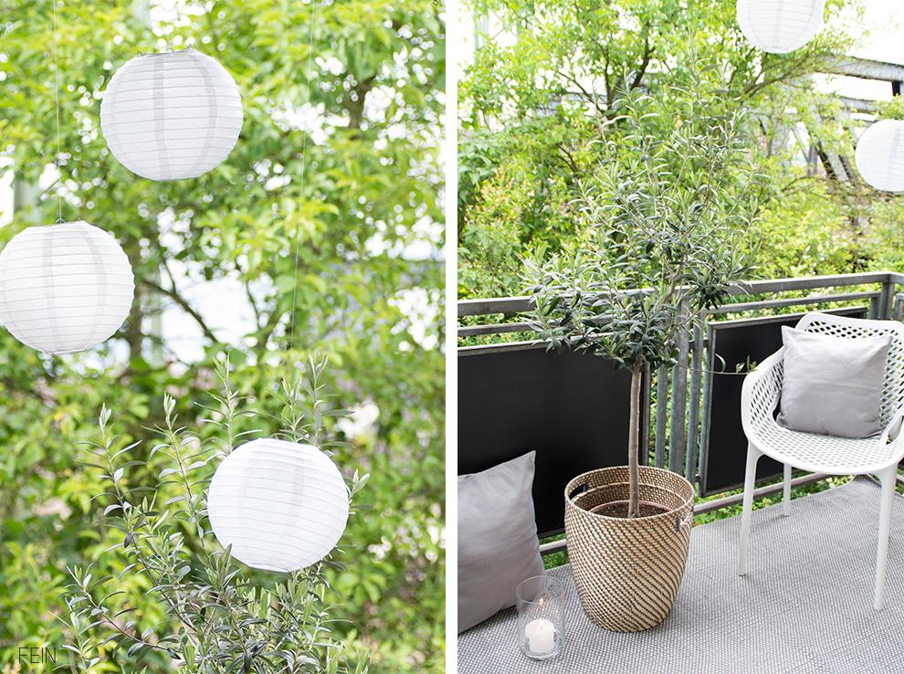 Balkon Olivenbaum Sommer