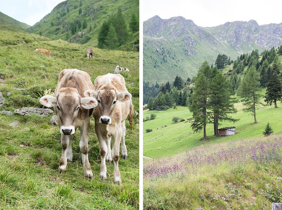 Zuhause Unterwegs Südtirol Berge