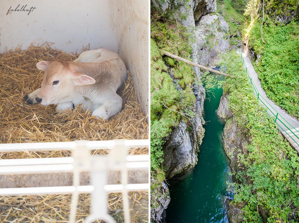 kleinwalsertal-blog-reisebericht-fein-und-fabelhaft-blogger-oesterreich-berde-wandern-mit-hund-diy-beton-nachttischlampe-beton-selber-giessen-10