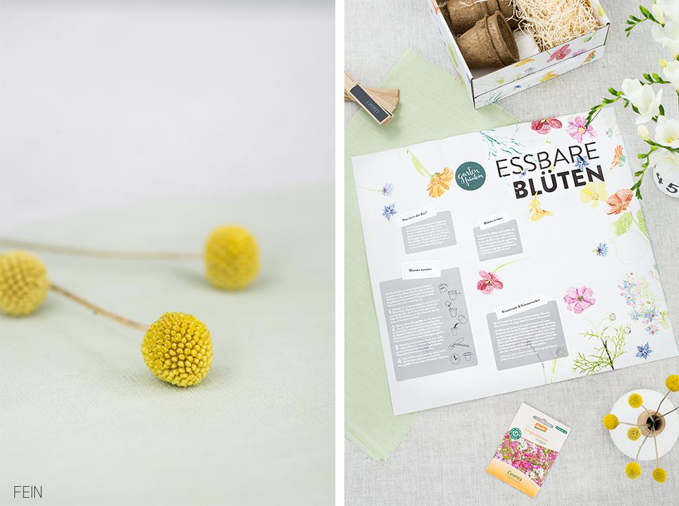 Essbare Blumen Anleitung Zucht Box
