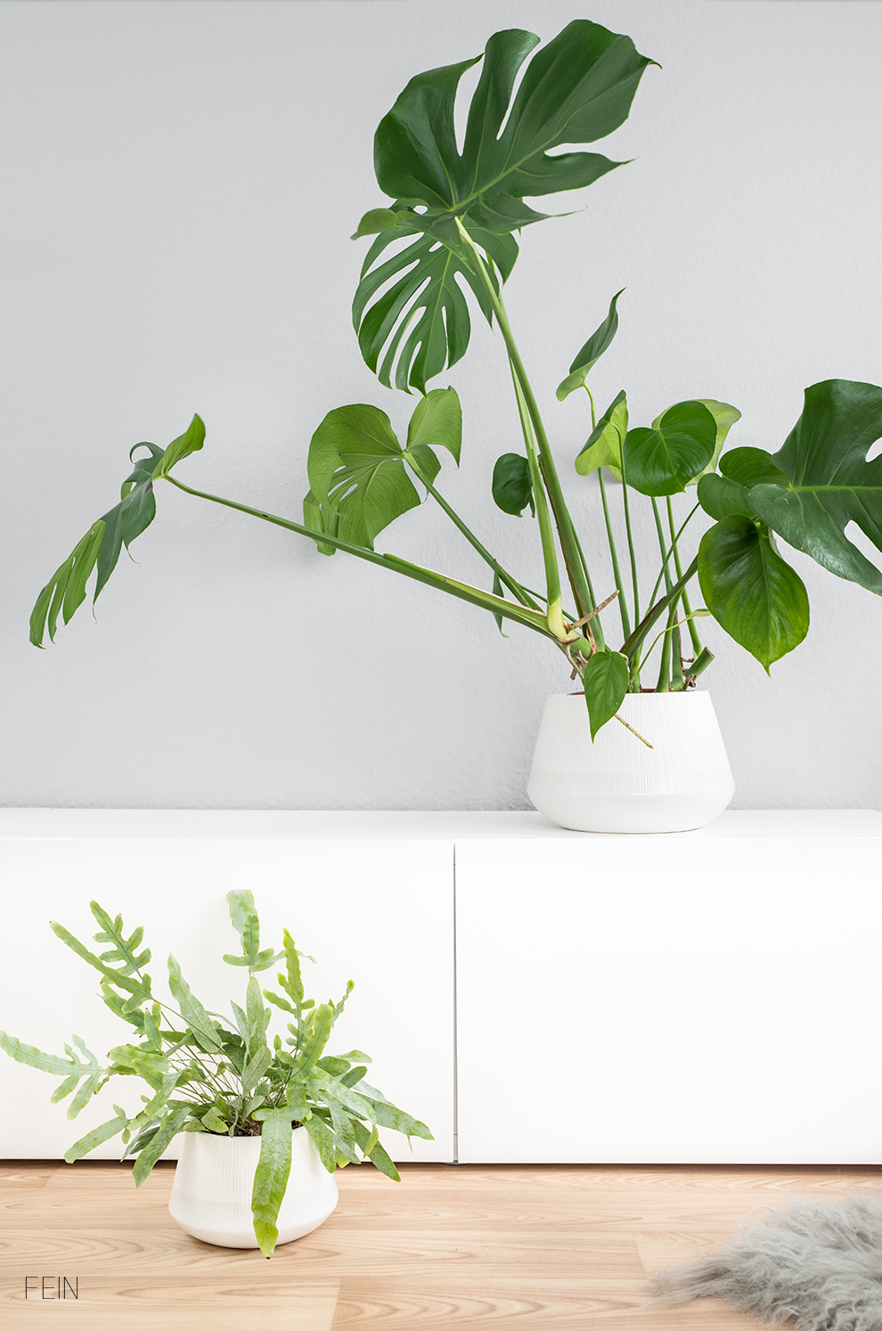 Greenery Monstera Dschungeltrend