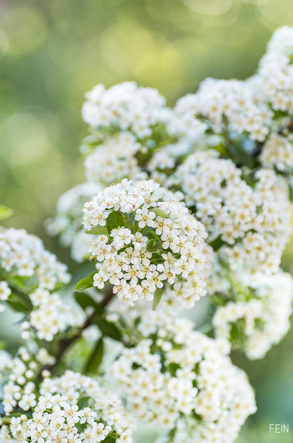 Balkon Sommer Blüten weiß