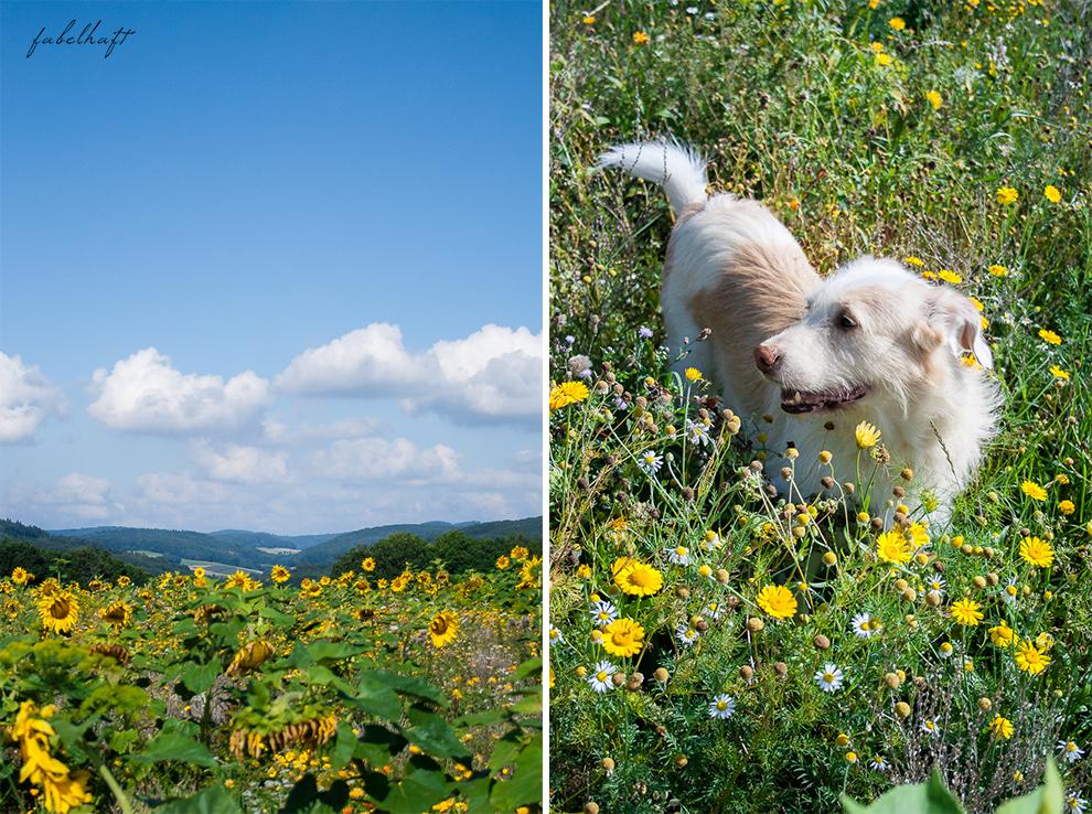 Wildcare Hundeshampoo Hund Pflege Haarkur struppig Weiches Fell Naturkosmetik Sonnenblumen Hundeliebe 2