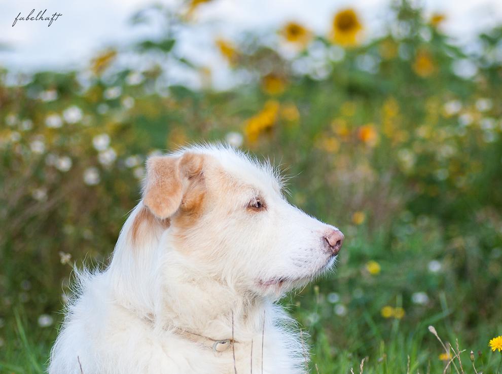Wildcare Hundeshampoo Hund Pflege Haarkur struppig Weiches Fell Naturkosmetik Sonnenblumen Hundeliebe 3