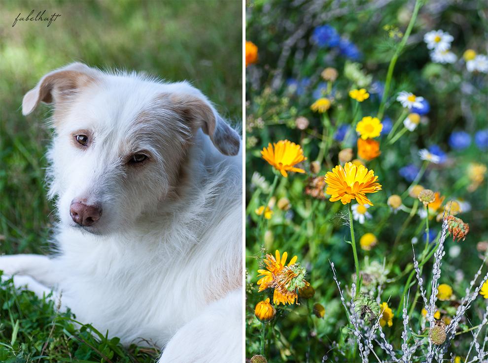 Wildcare Hundeshampoo Hund Pflege Haarkur struppig Weiches Fell Naturkosmetik Sonnenblumen Hundeliebe 5