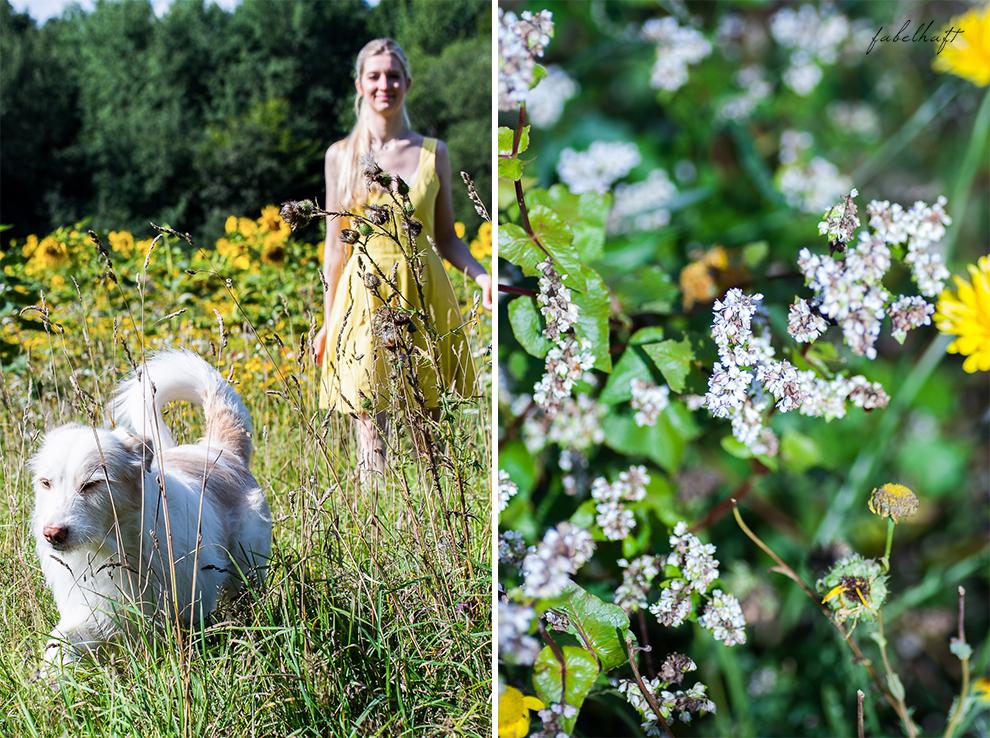 Wildcare Hundeshampoo Hund Pflege Haarkur struppig Weiches Fell Naturkosmetik Sonnenblumen Hundeliebe 7