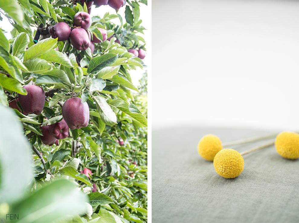 Südtirol Apfelernte Äpfel