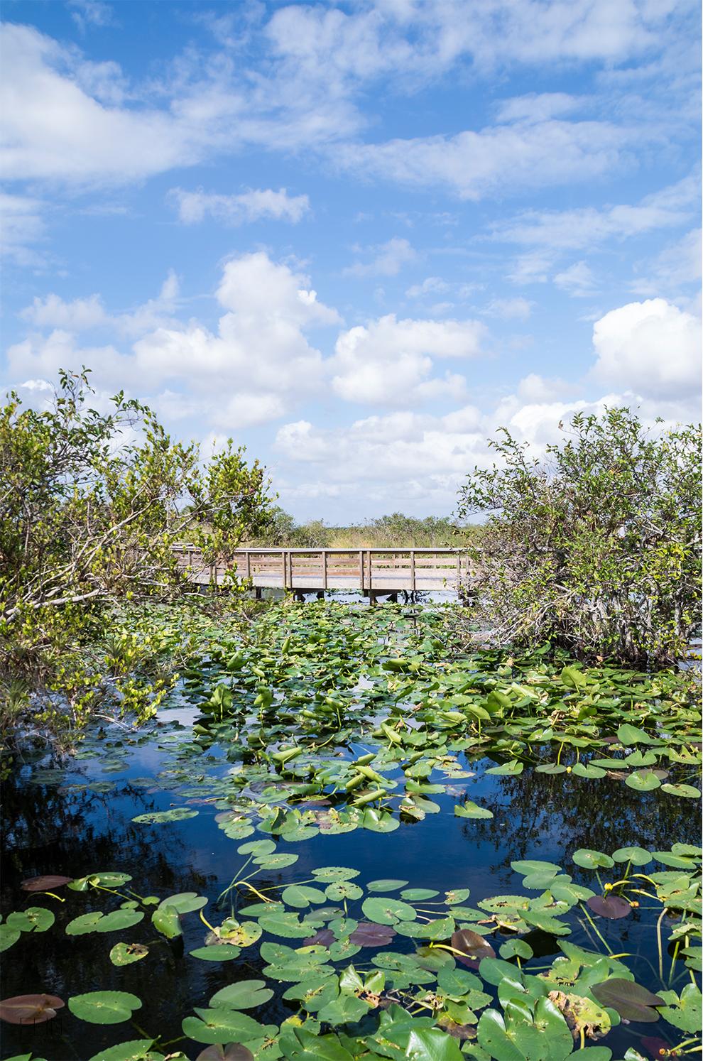 Florida Everglades Travel