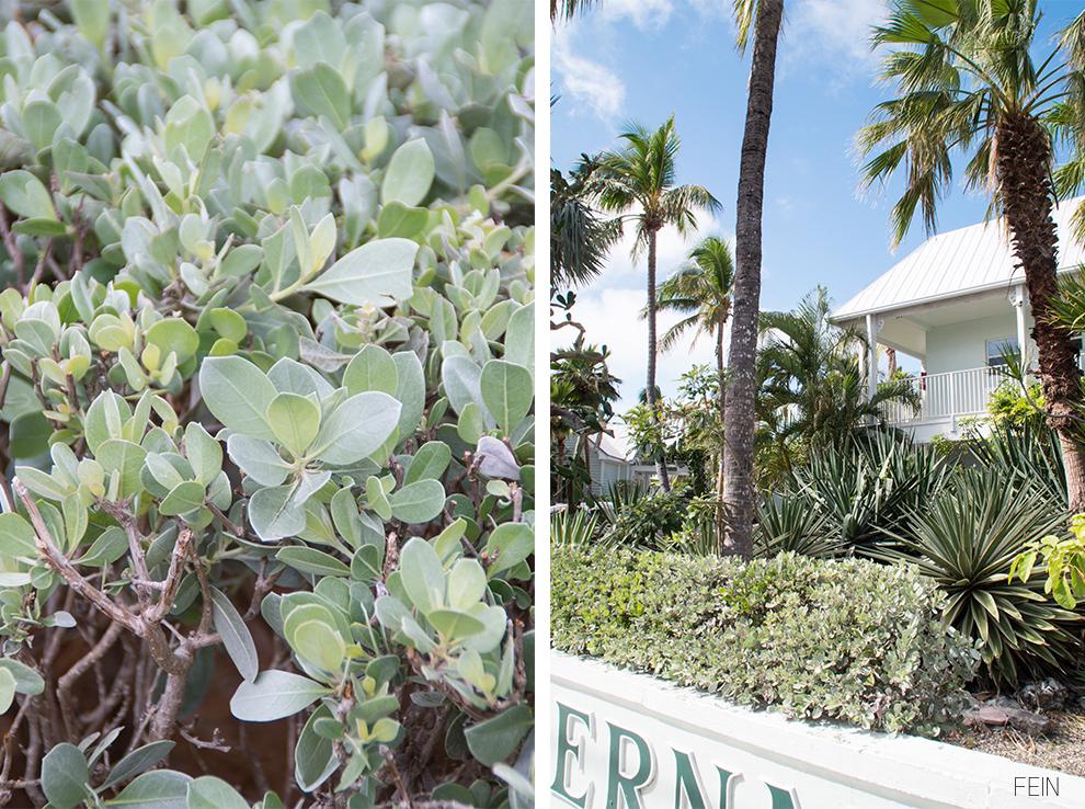 Florida Pflanzen Palmen