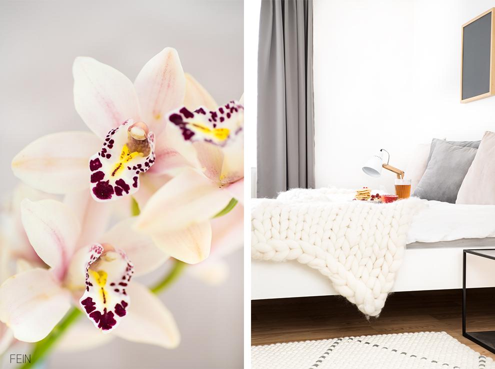 Sanfte Farben Rosa Orchidee