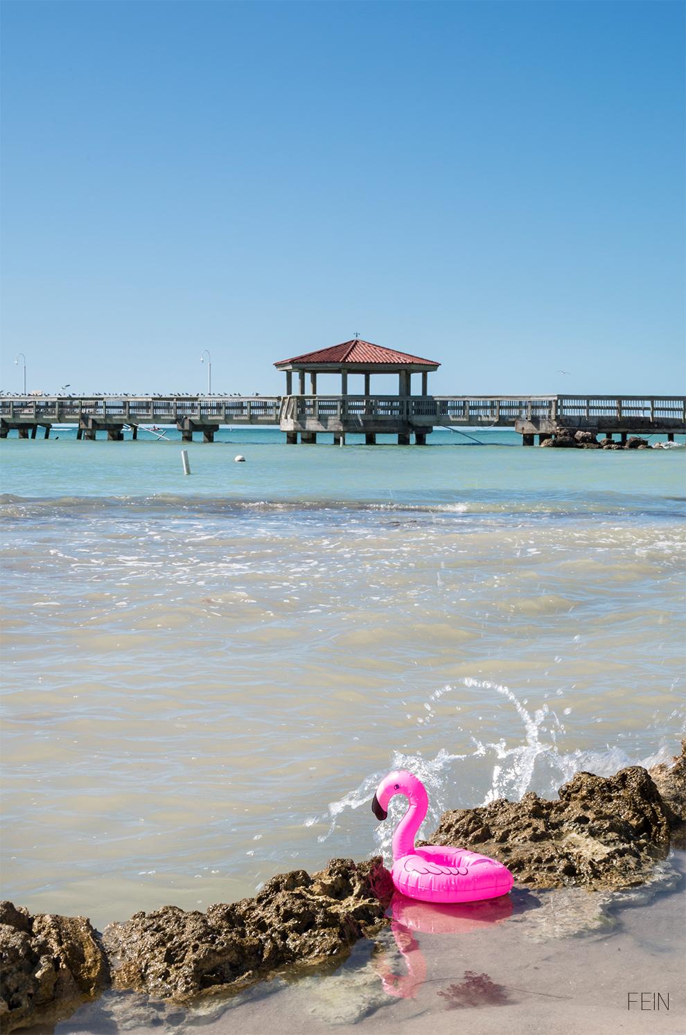 Florida Flamingo
