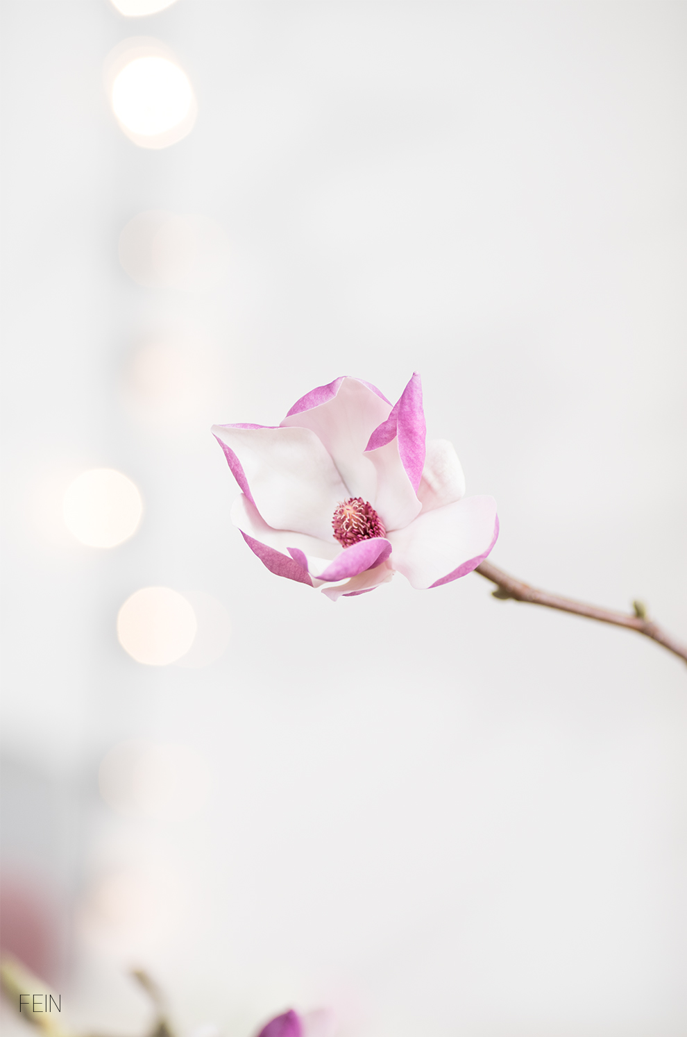 Spring Frühling Magnolien