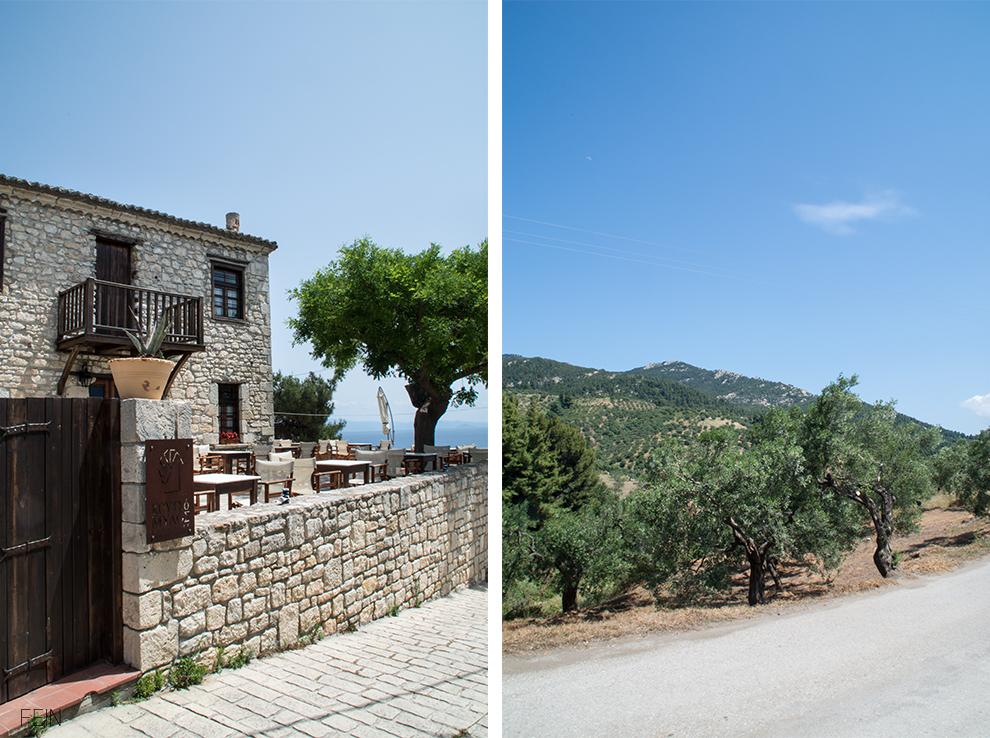 Urlaub Griechenland Olivenbäume