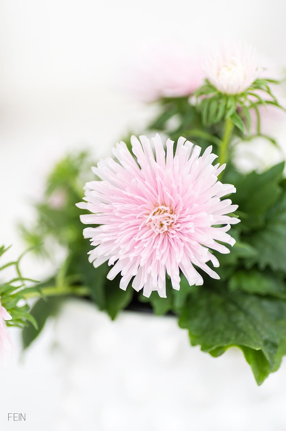 Stilmix Pflanzen Blüten Sommer
