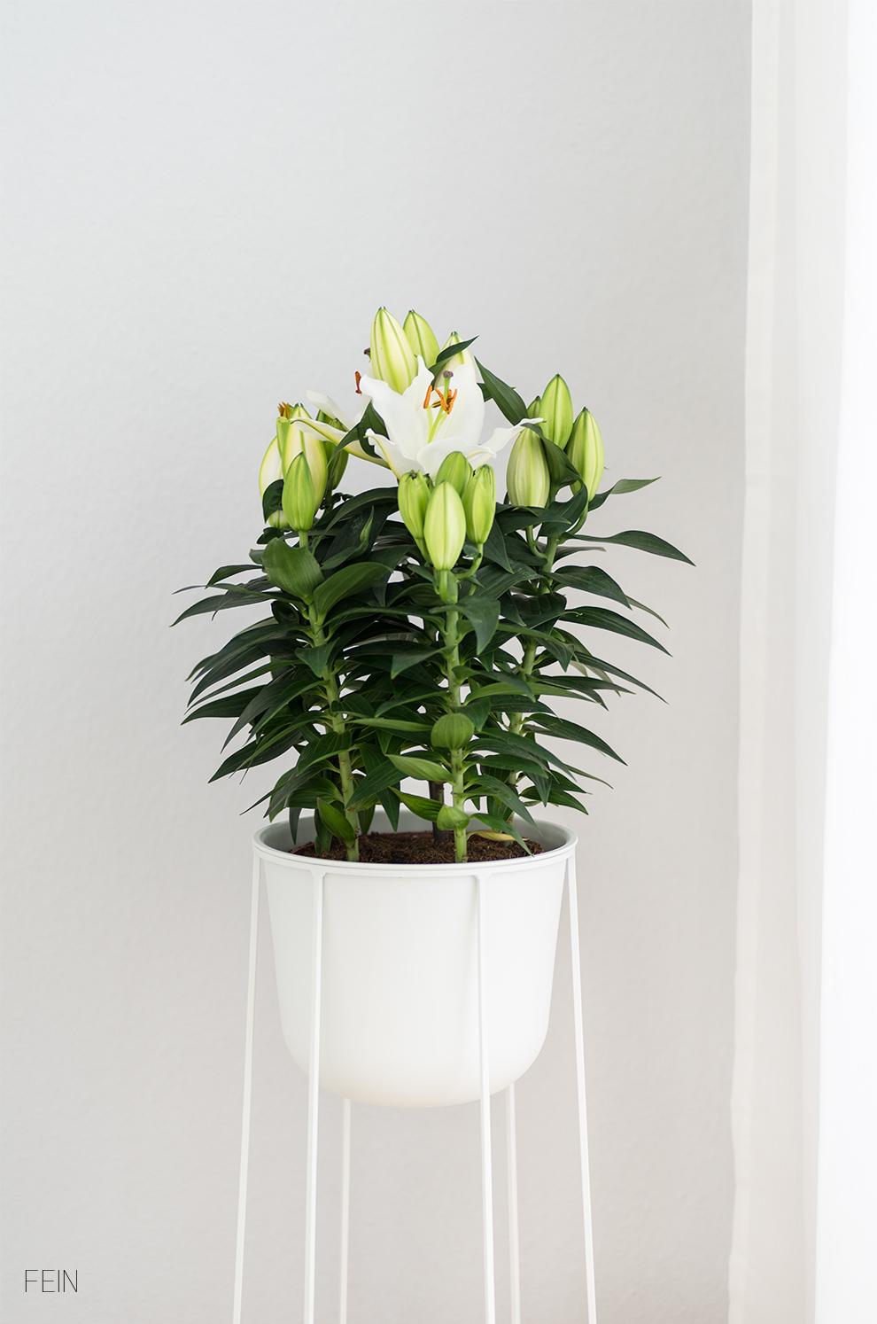 Wohnen Menu Flower Pot Pflanztopf