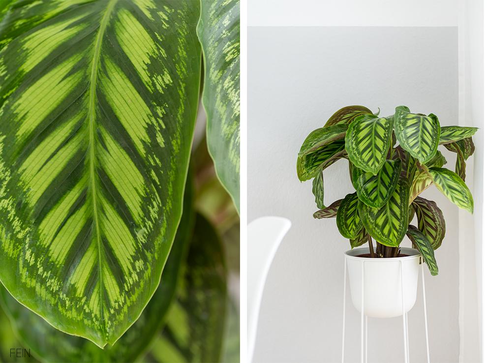 Wohnen Zimmerpflanze Dschungel Urban jungle