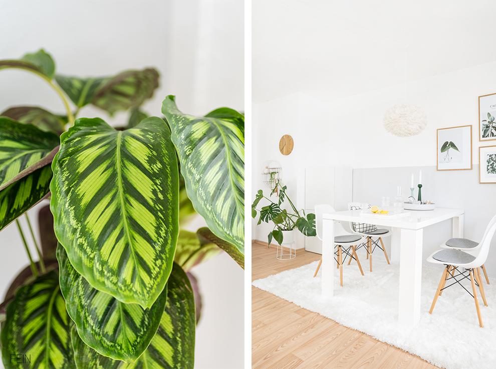 Wohnen grün Grünpflanzen