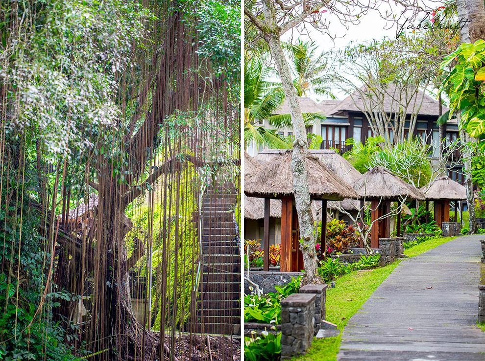 Bali Ubud Natur Urwald Regenwald Dschungel Maya Resort Flitterwochen Urlaub 2