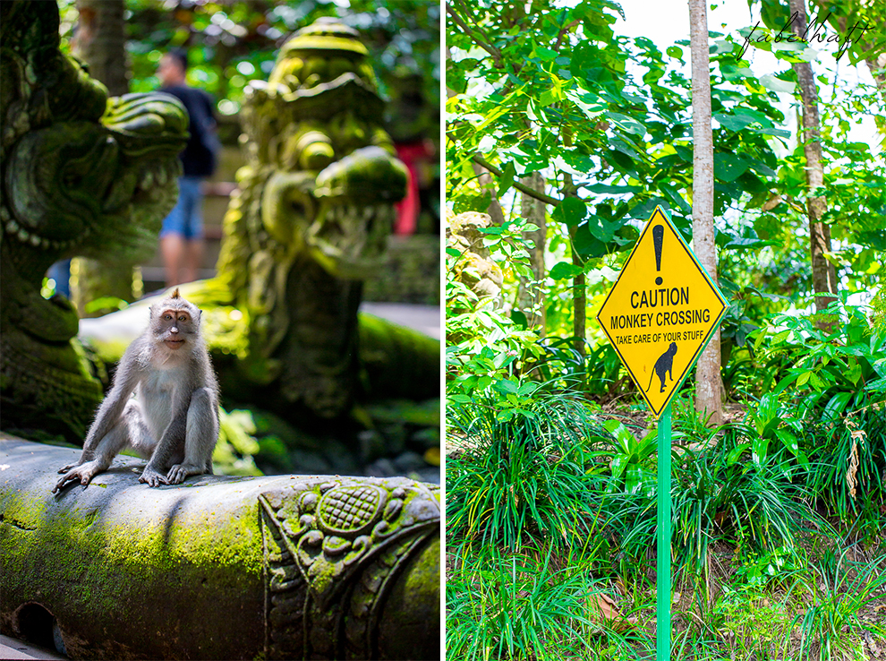Ubud Bali Markt Korbwaren Stand Tradition Kultur Stadt Affe Monkey Forest