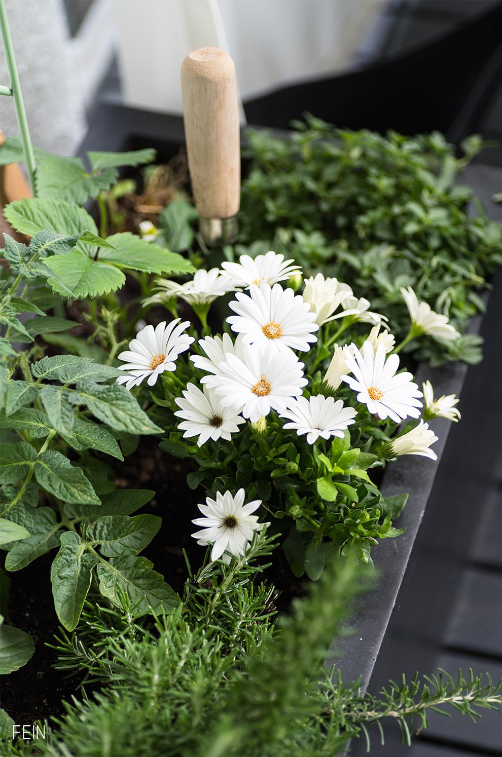 Urban Gardening Blumen