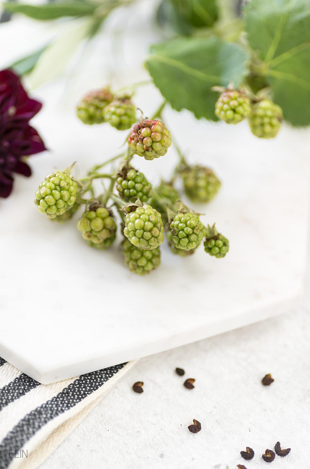 Rote Beete Dip Früchte Gemüse Spätsommer