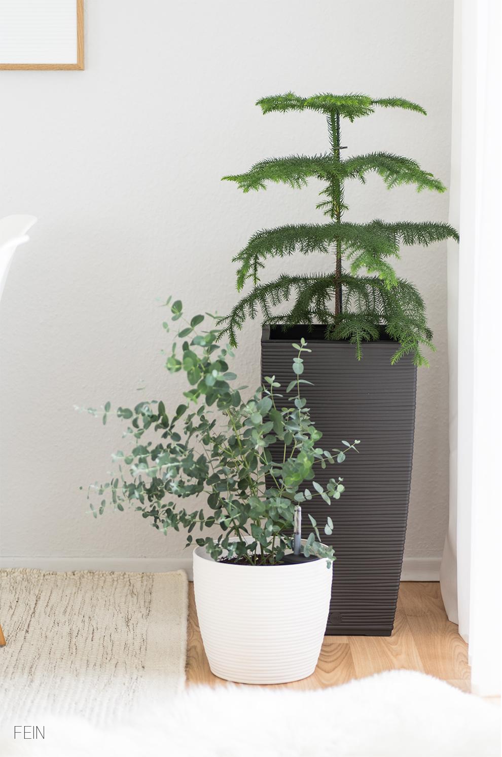 Zimmerpflanzen Cosy Töpfe Emsa
