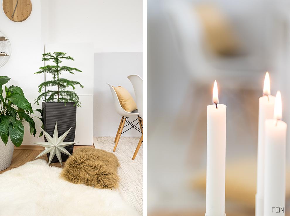 Zimmerpflanzen Cosy Winter Zimmertanne