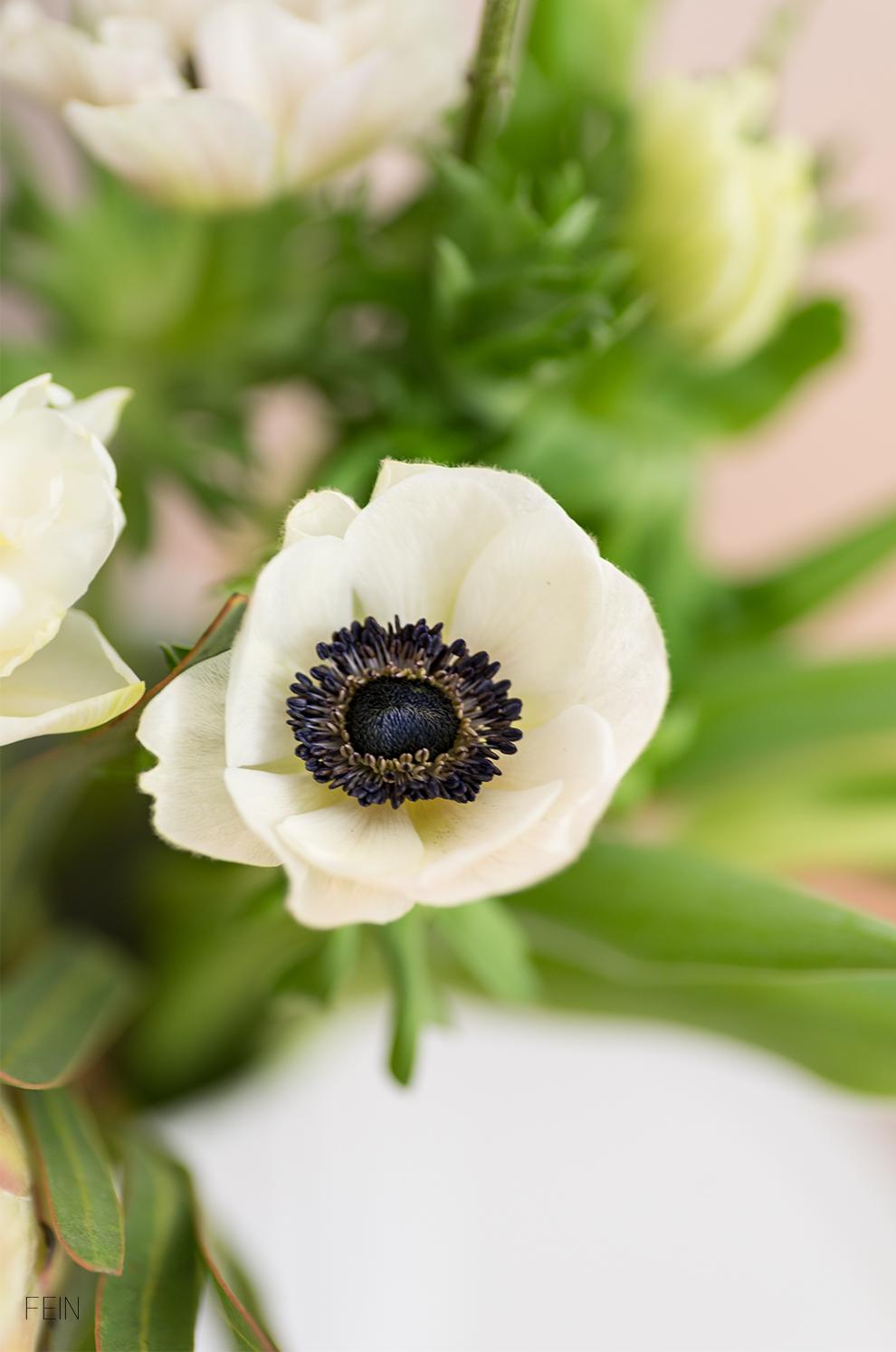 Beige Blume Frühling