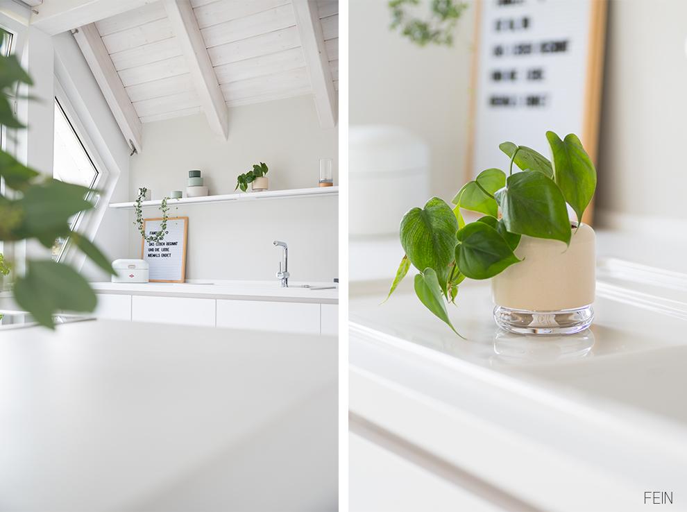 Pflanzen Zimmerpflanzen selbstbewässernd