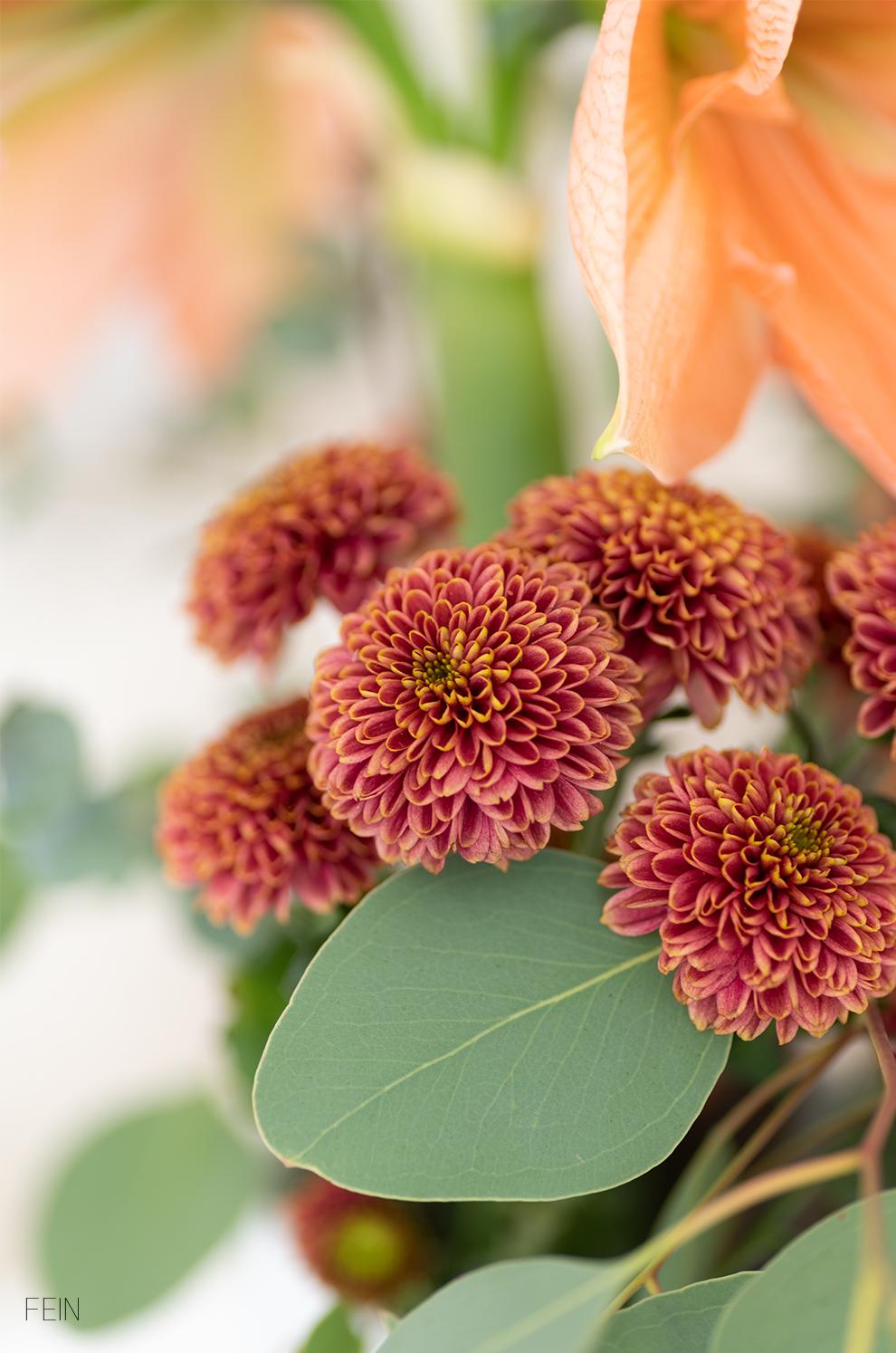 Adventszeit Blumen