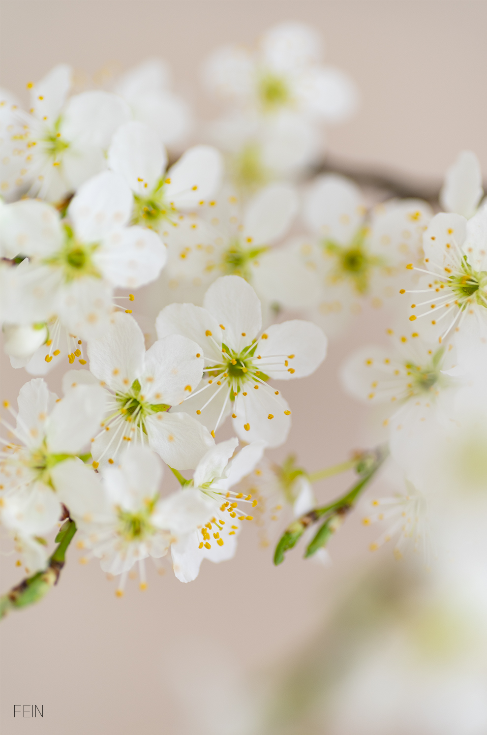 Blüten Frühling