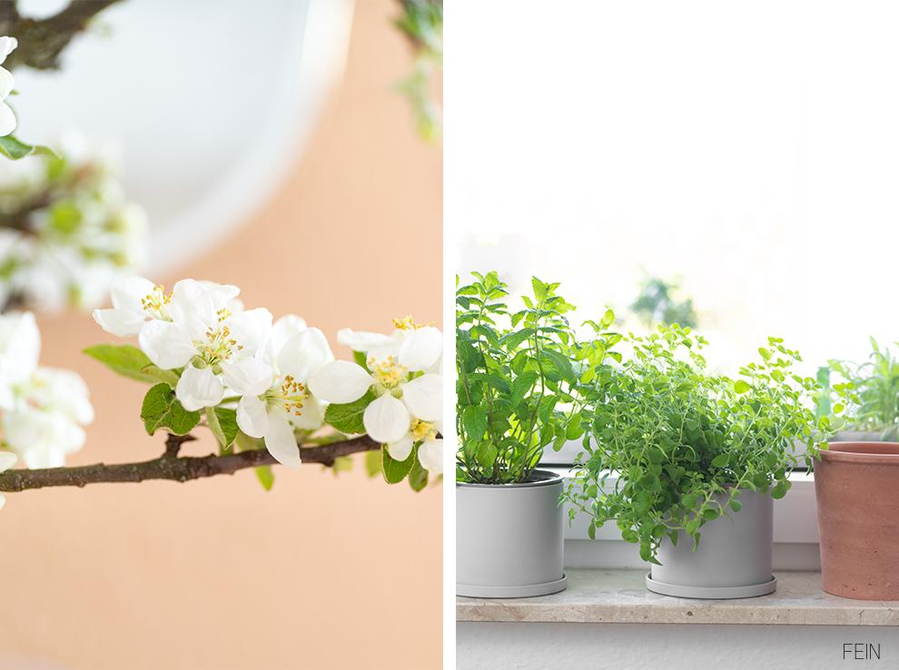 Farben Frühling Pflanzen