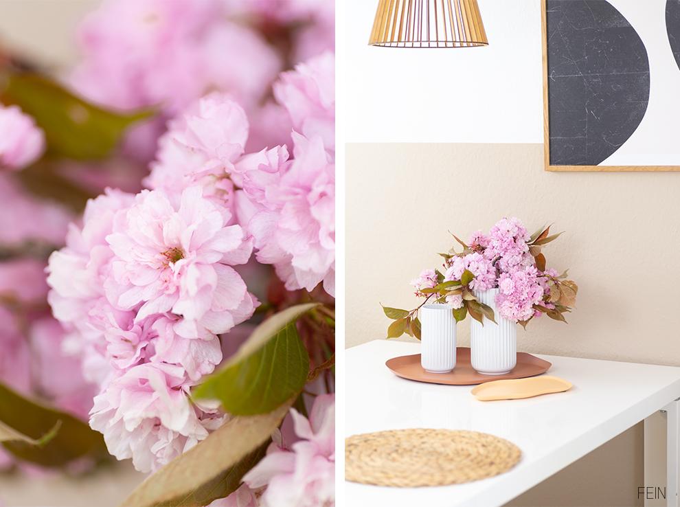 Frühling Blüten Kirsch